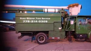 Busy-Beaver-Tree-Service-Kelowna-2