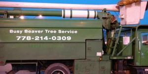 Busy-Beaver-Tree-Service-Kelowna